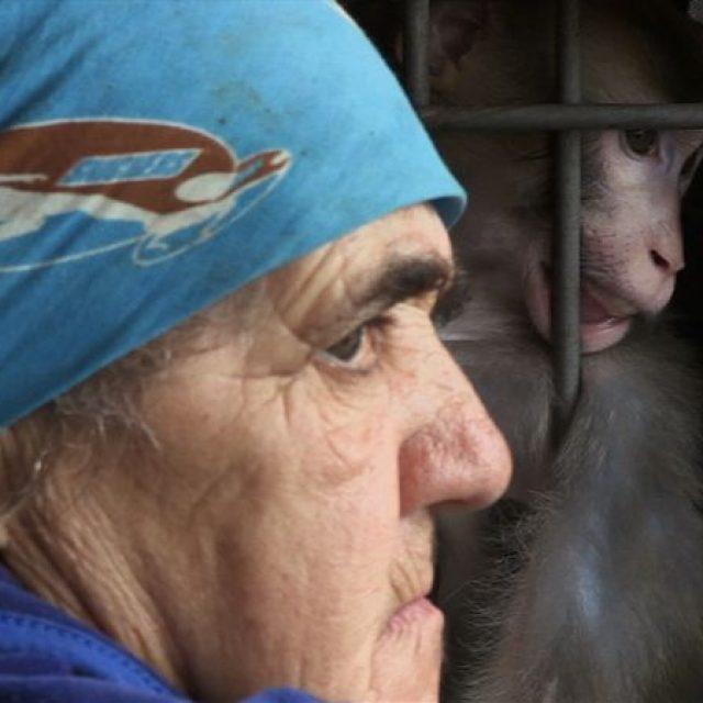 """Documentarul românesc """"Ouăle lui Tarzan"""", în premieră mondială la TIFF"""