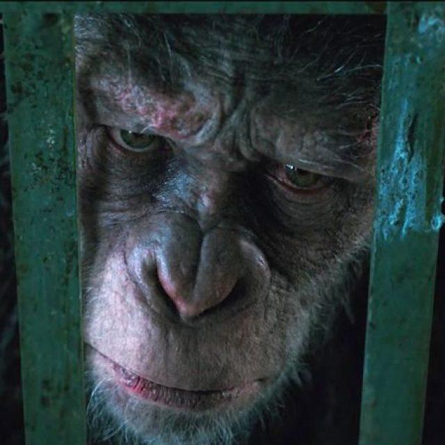 """Filmul """"Planeta maimuţelor: Războiul"""" (2017)"""